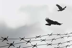 Birds and barbed wire