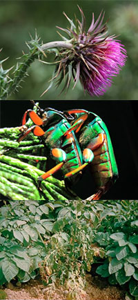 plant-protection-collage.jpg