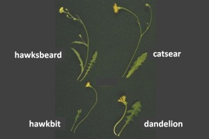 flatweed stems N2.jpg