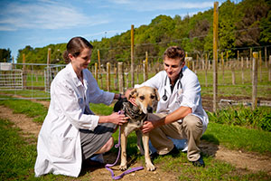 Massey veterinarians with dog outside