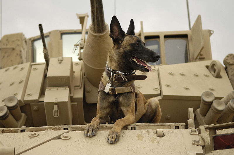 Dogs in Warfare