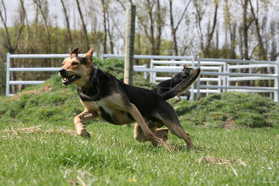 What makes a working dog excellent?