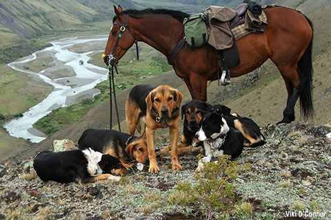 Dogs and horse on ridge