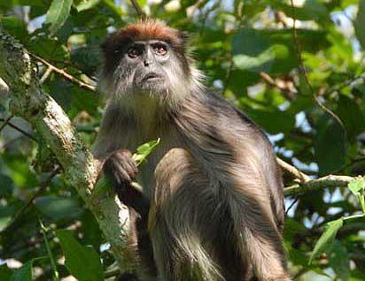 monkey-spider.jpg