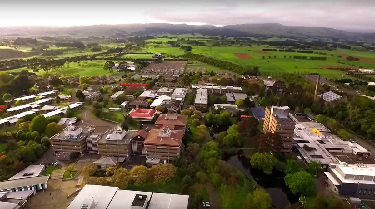 Aerial view of Massey University Manawatu campus