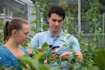 Massey University ranked 34 in QS World ranking for Agriculture and Forestry